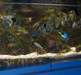 AQUATIC DISPLAY
